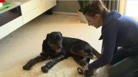 perro-protesis